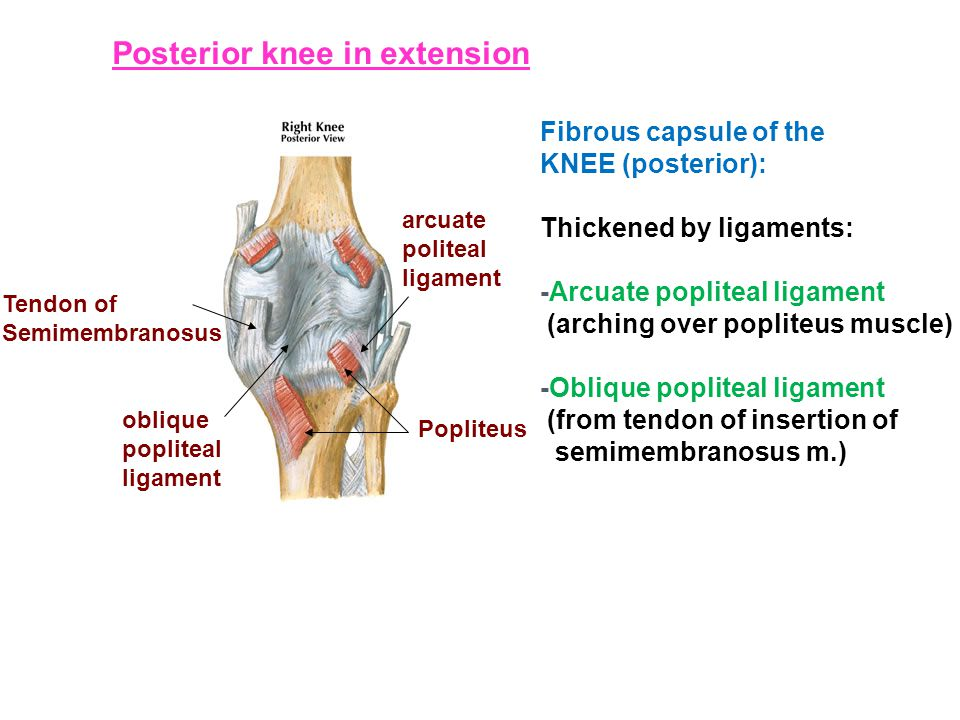 Posterior knee in extension