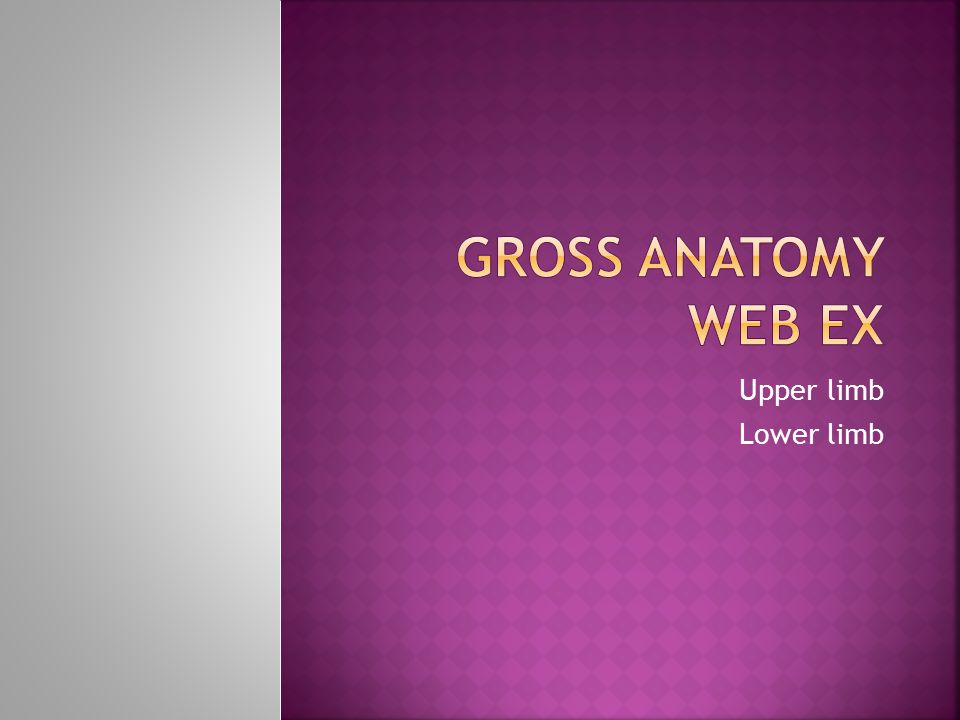 Gross anatomy Web ex Upper limb Lower limb