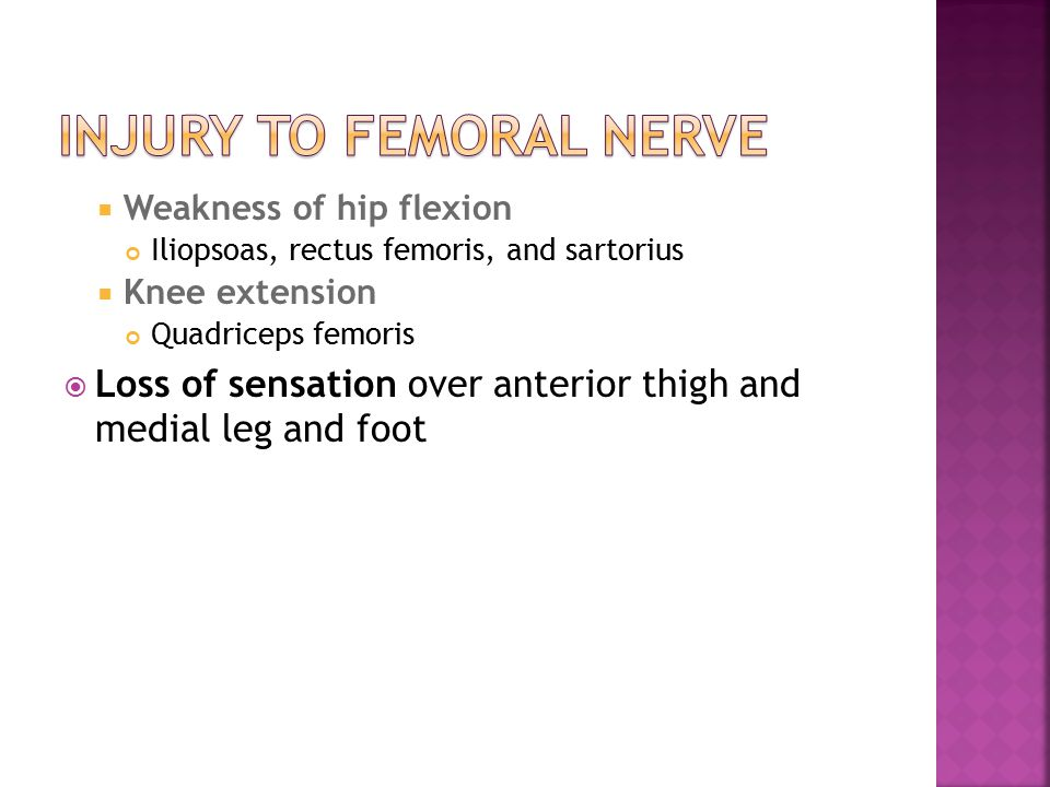 gross anatomy web ex upper limb lower limb. - ppt video online, Muscles
