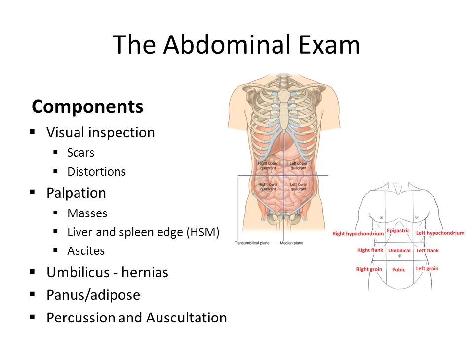 The Abdominal Exam Components Visual inspection Palpation