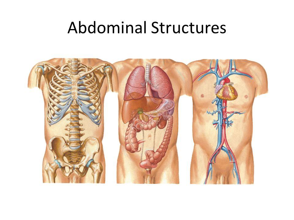 Abdominal Structures