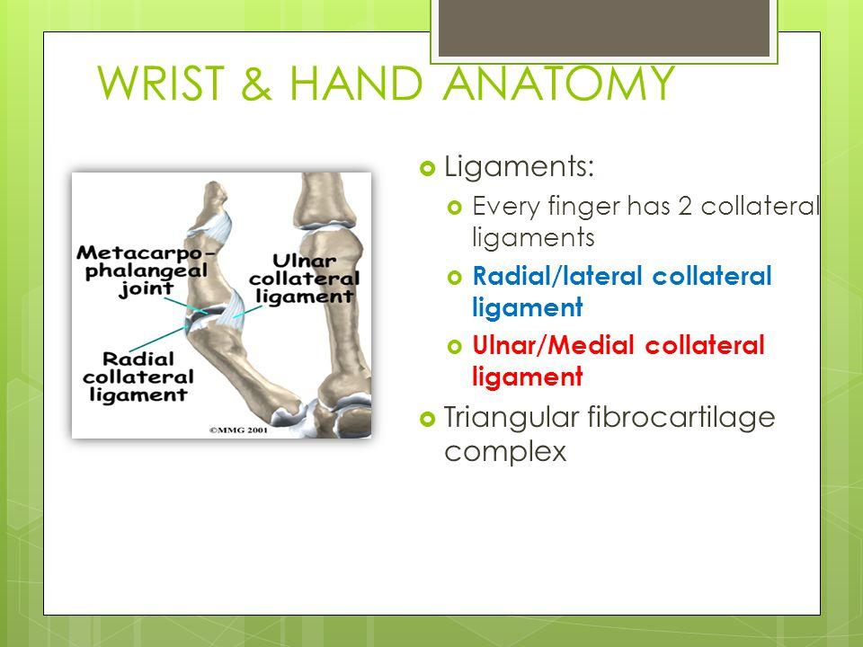 WRIST & HAND ANATOMY Ligaments: Triangular fibrocartilage complex