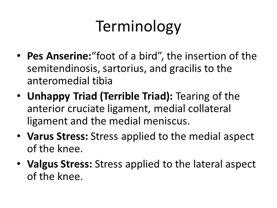 Terminology Pes Anserine: foot of a bird , the insertion of the semitendinosis, sartorius, and gracilis to the anteromedial tibia.