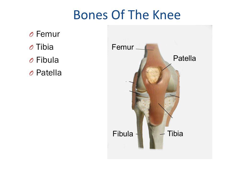 Bones Of The Knee Femur Tibia Fibula Patella Femur Patella Fibula