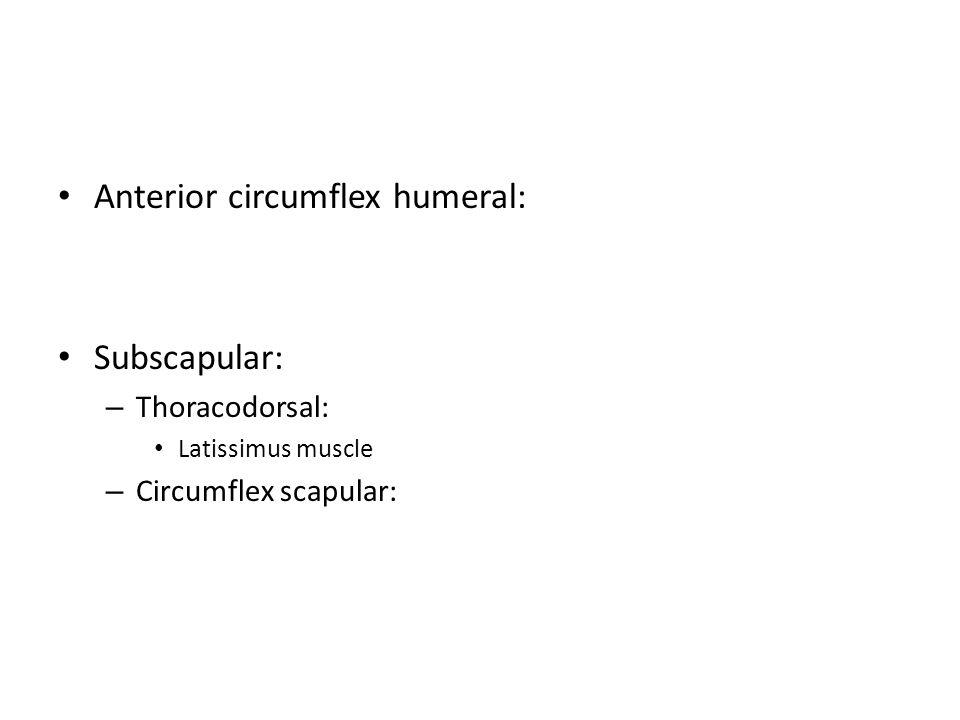 Anterior circumflex humeral: