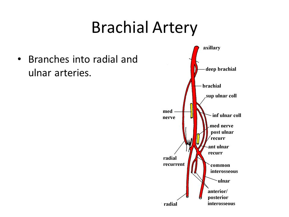 Blood Vessel And Lymphatics Of Upper Limb Ppt Video Online Download