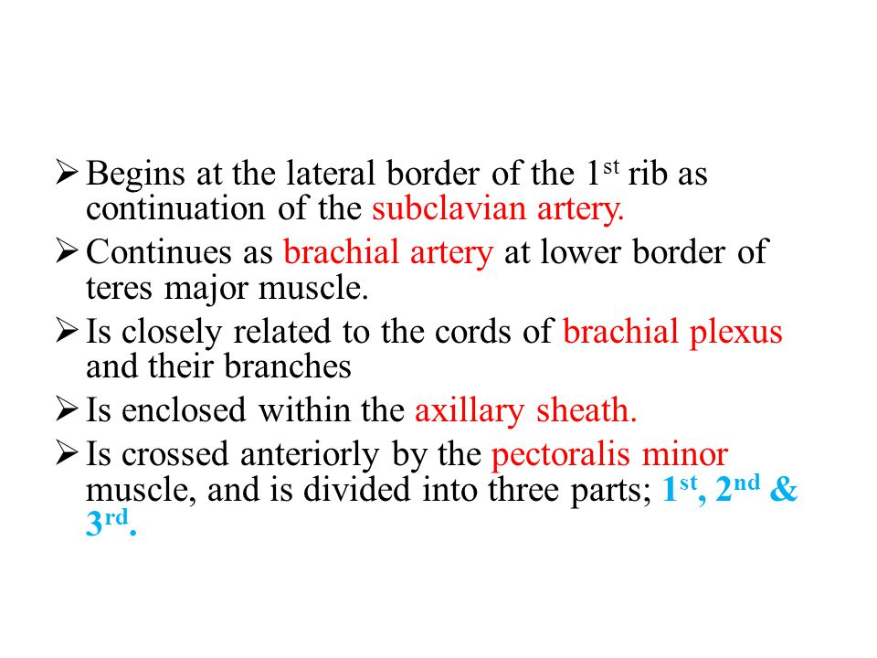 Begins at the lateral border of the 1st rib as continuation of the subclavian artery.