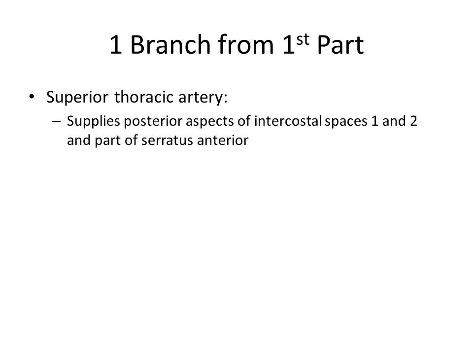 1 Branch from 1st Part Superior thoracic artery: