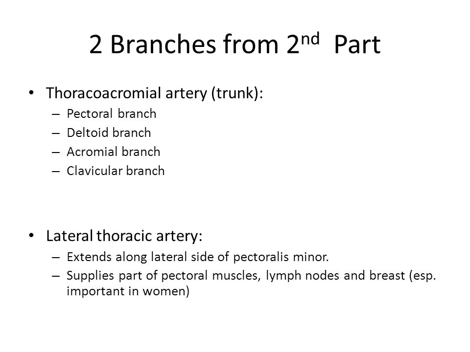 2 Branches from 2nd Part Thoracoacromial artery (trunk):