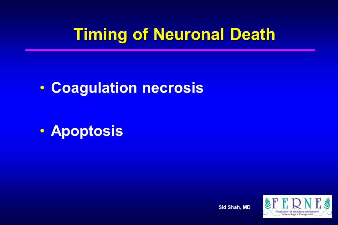 Timing of Neuronal Death