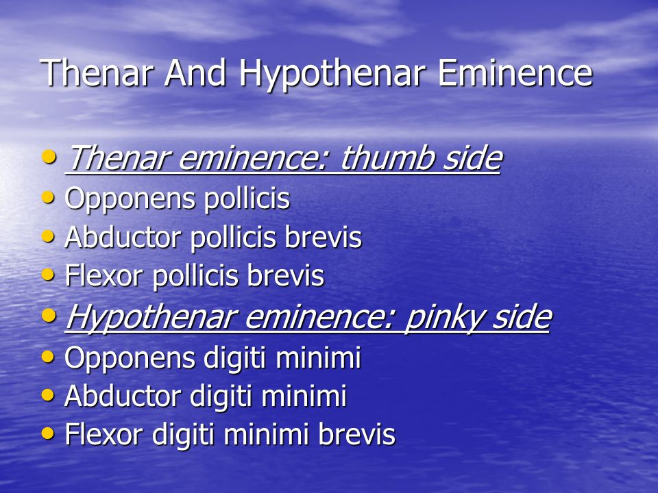 Thenar And Hypothenar Eminence