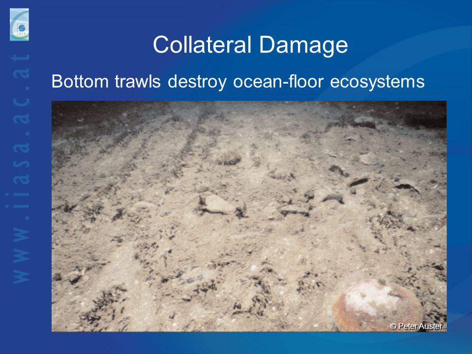 Collateral Damage Bottom trawls destroy ocean-floor ecosystems