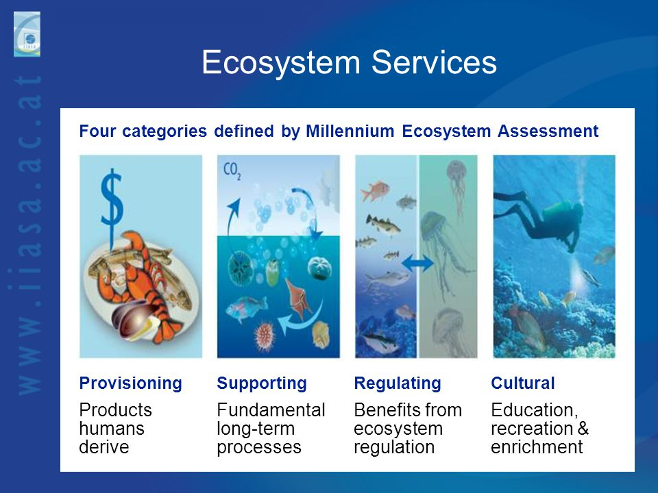 Ecosystem Services Products humans derive