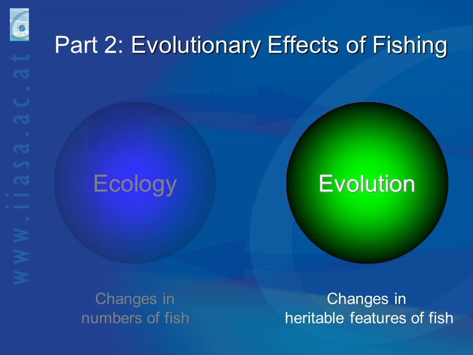 Part 2: Evolutionary Effects of Fishing
