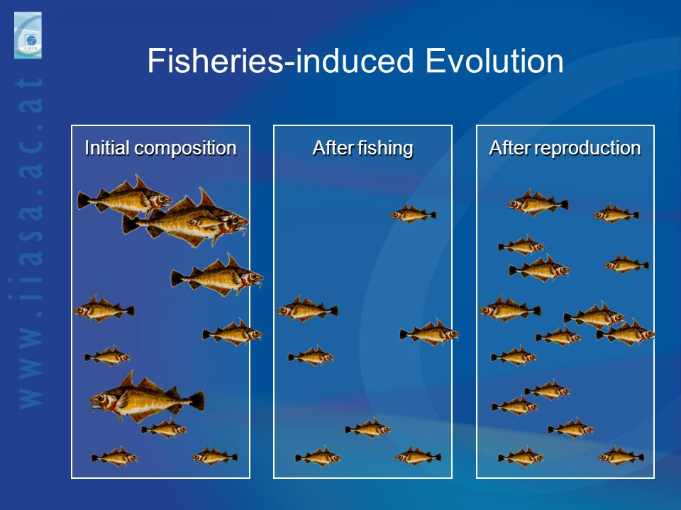 Fisheries-induced Evolution