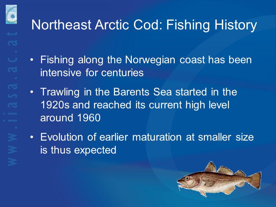 Northeast Arctic Cod: Fishing History