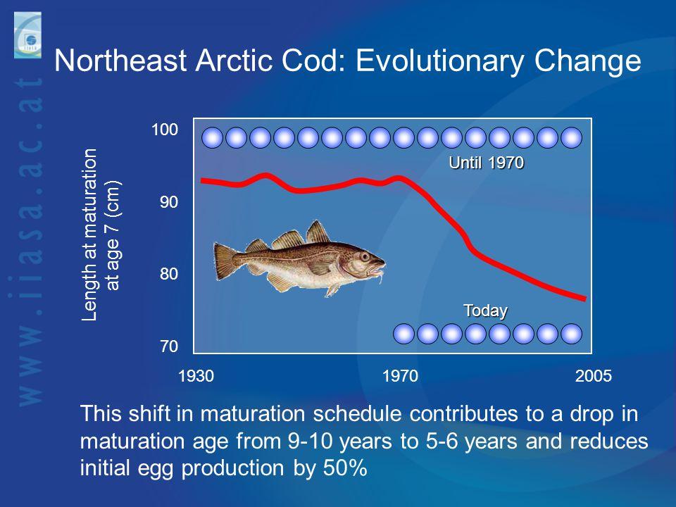 Northeast Arctic Cod: Evolutionary Change