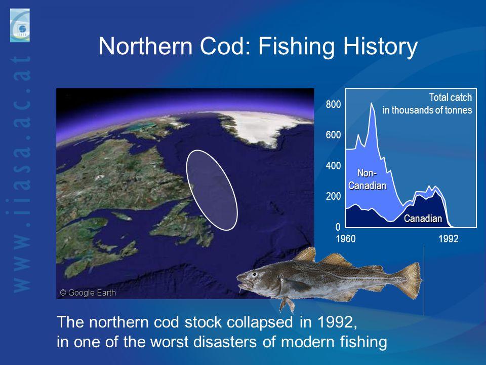Northern Cod: Fishing History