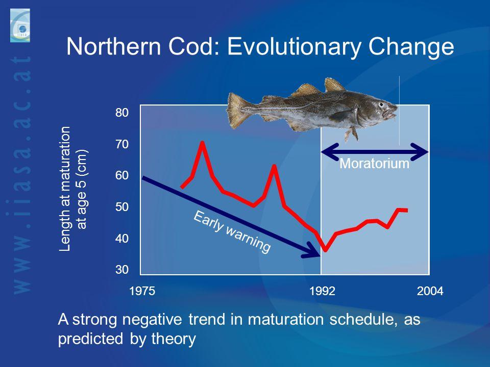Northern Cod: Evolutionary Change