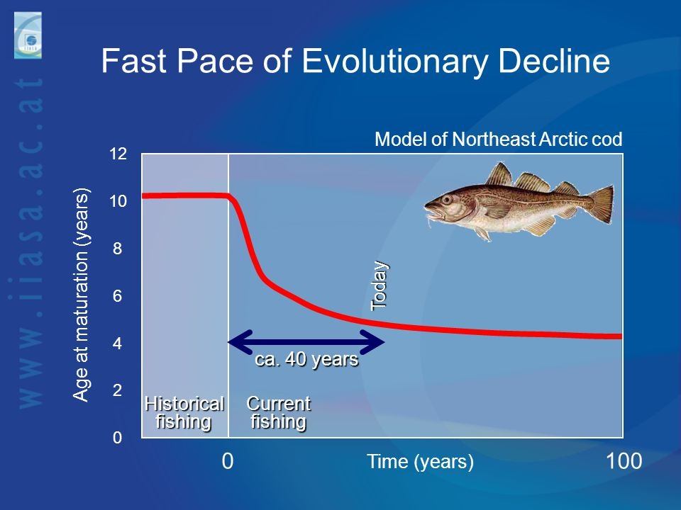Fast Pace of Evolutionary Decline