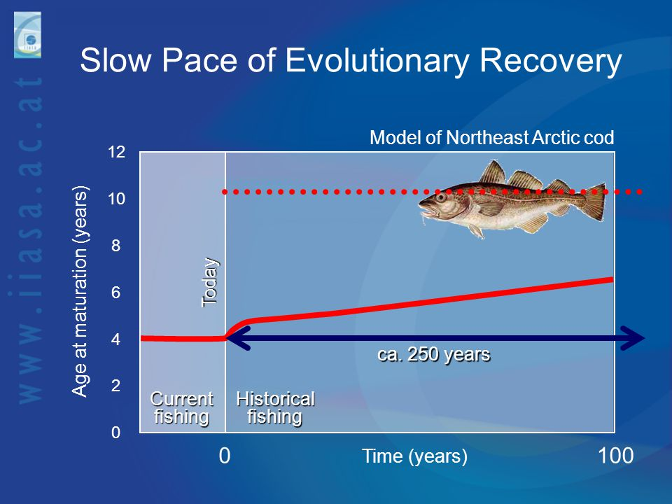 Slow Pace of Evolutionary Recovery