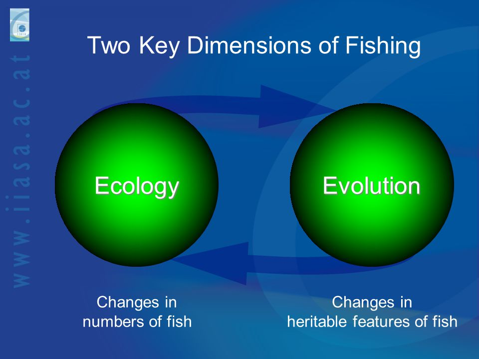 Two Key Dimensions of Fishing