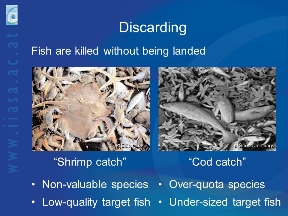 Discarding Fish are killed without being landed Shrimp catch