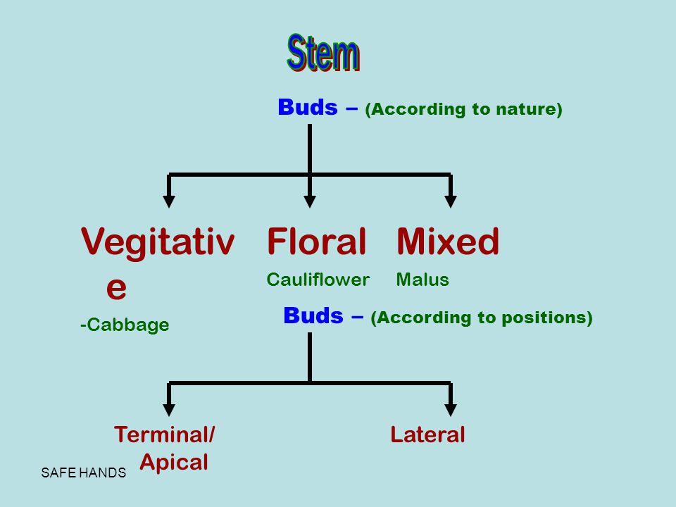 Vegitative Floral Mixed Stem Buds – (According to nature)