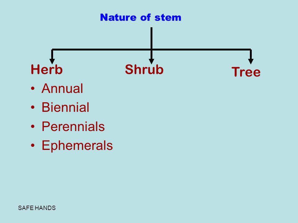 Herb Annual Biennial Perennials Ephemerals Shrub Tree Nature of stem