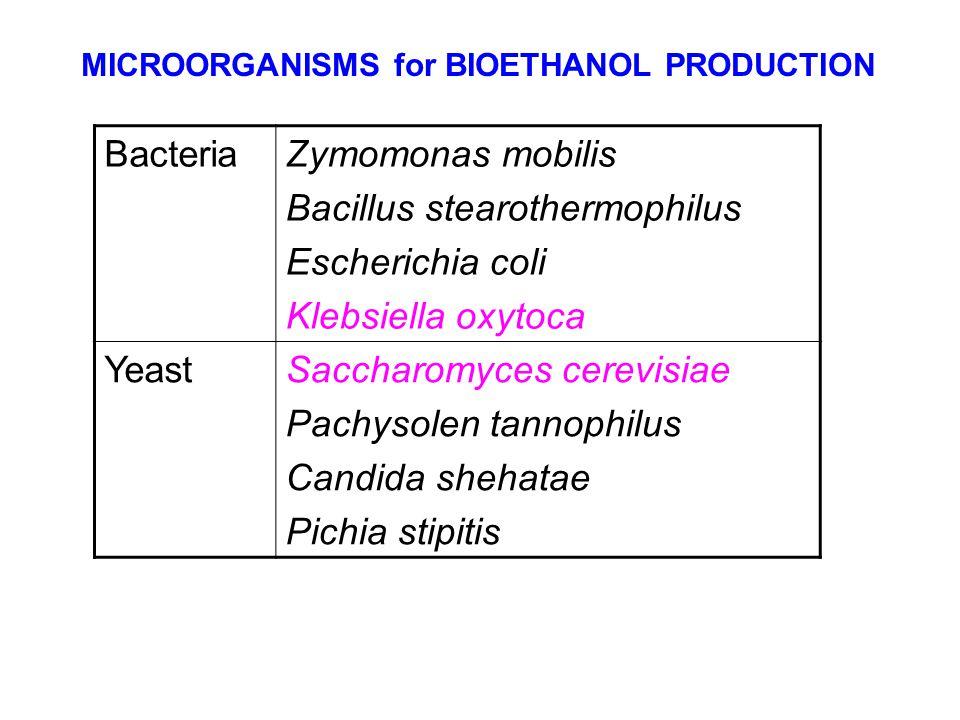 Bacillus stearothermophilus Escherichia coli Klebsiella oxytoca Yeast