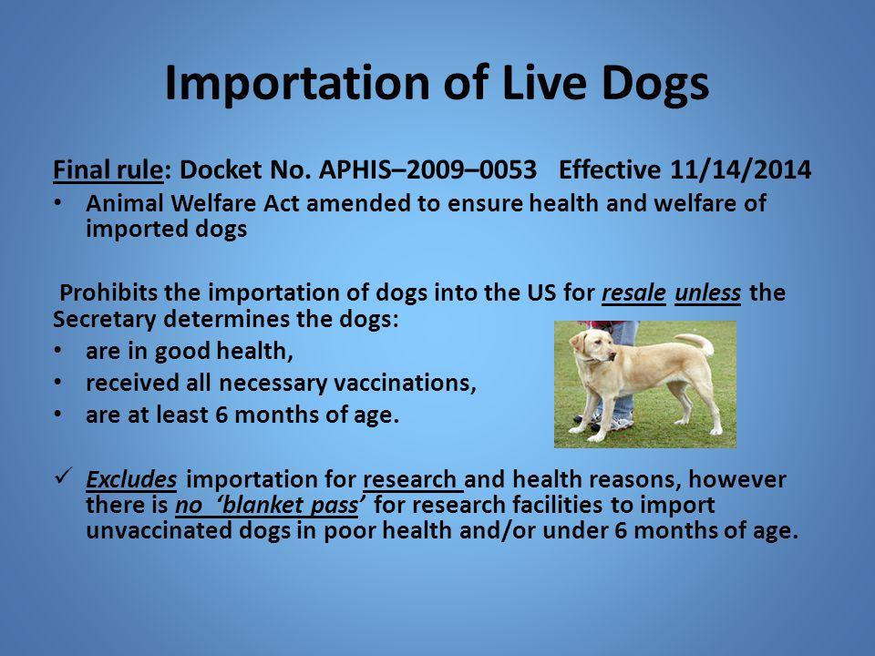 Importation of Live Dogs