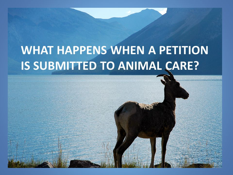 WHAT HAPPENS WHEN A PETITION IS SUBMITTED TO ANIMAL CARE
