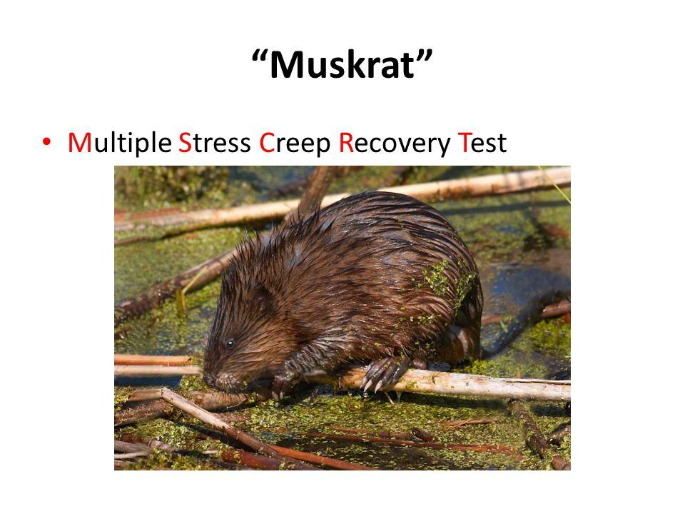 Muskrat Multiple Stress Creep Recovery Test