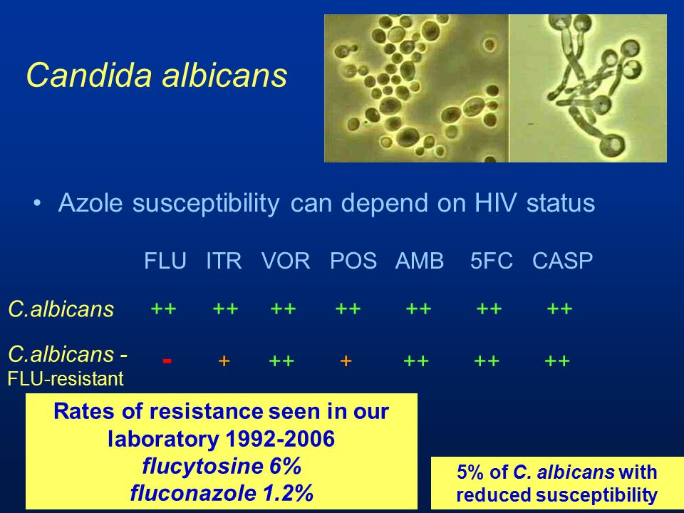 Candida albicans - + ++ + ++ ++ ++