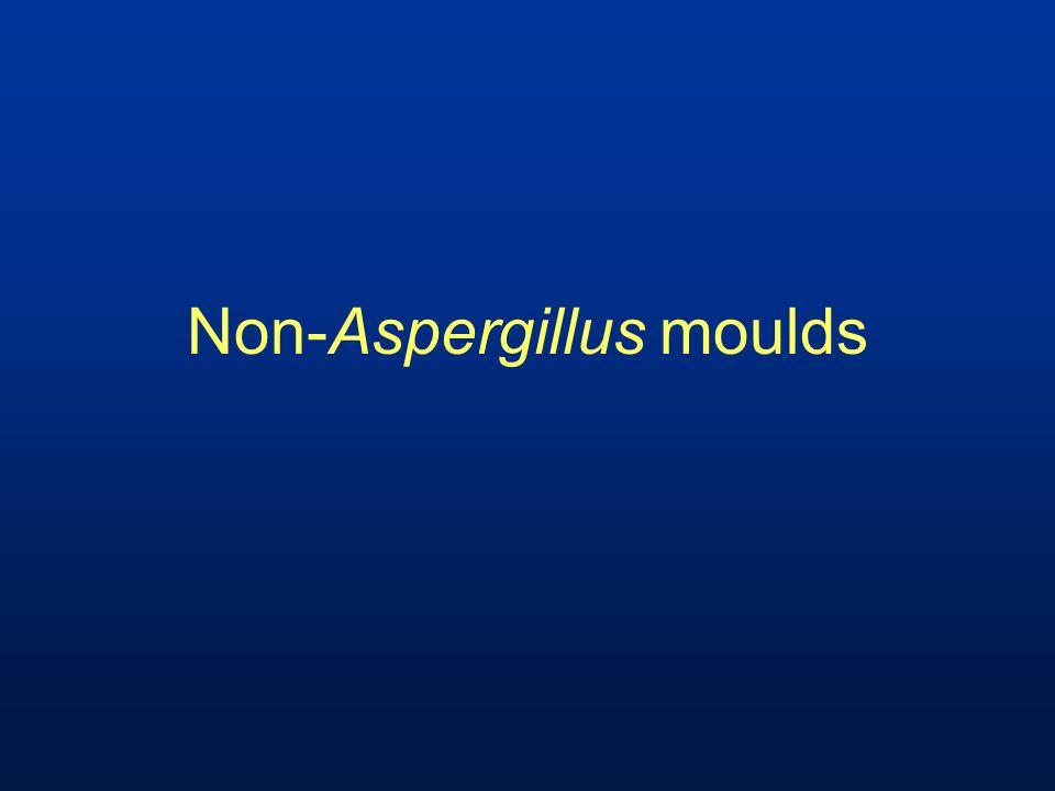 Non-Aspergillus moulds