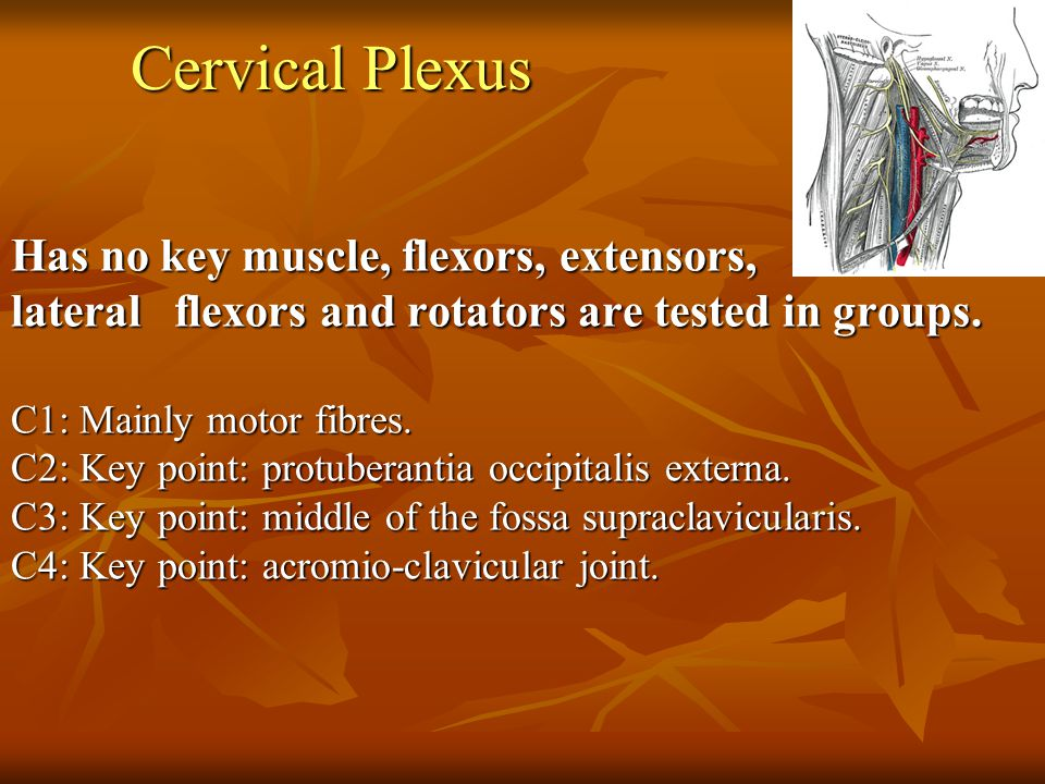 Cervical Plexus Has no key muscle, flexors, extensors,