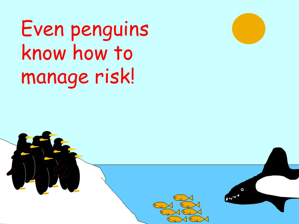 Even penguins know how to manage risk!