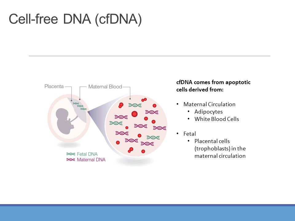 Cell-free DNA (cfDNA) cfDNA comes from apoptotic cells derived from: