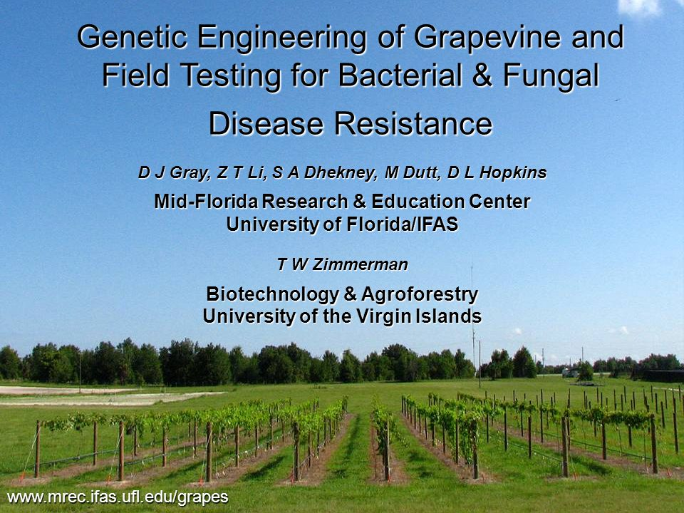 Genetic Engineering of Grapevine and Field Testing for Bacterial & Fungal Disease Resistance