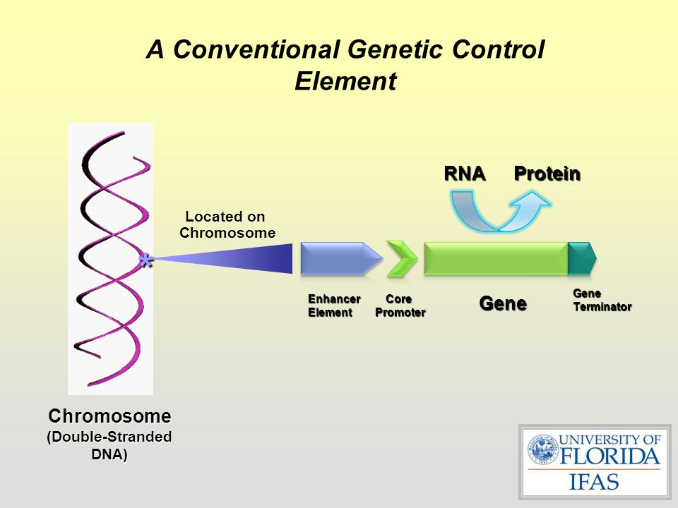 A Conventional Genetic Control Element
