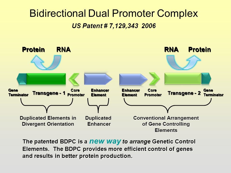 Bidirectional Dual Promoter Complex US Patent # 7,129,343 2006
