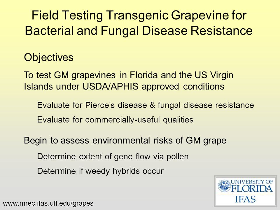 Field Testing Transgenic Grapevine for Bacterial and Fungal Disease Resistance