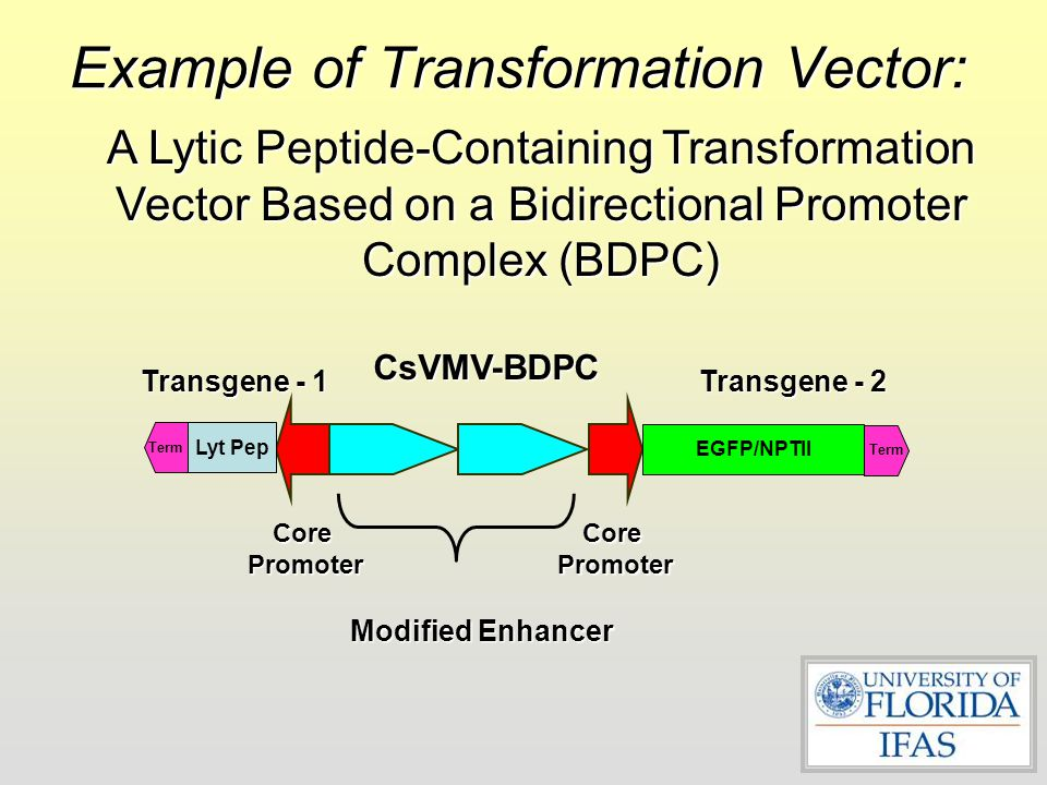 Example of Transformation Vector: