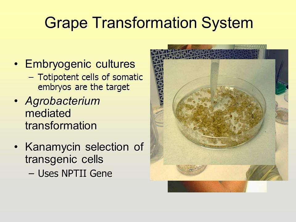 Grape Transformation System
