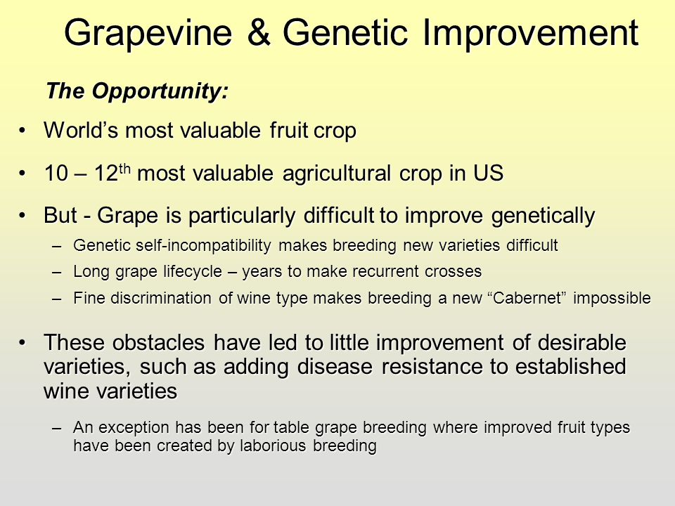 Grapevine & Genetic Improvement