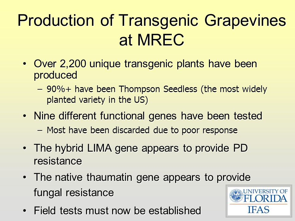 Production of Transgenic Grapevines at MREC
