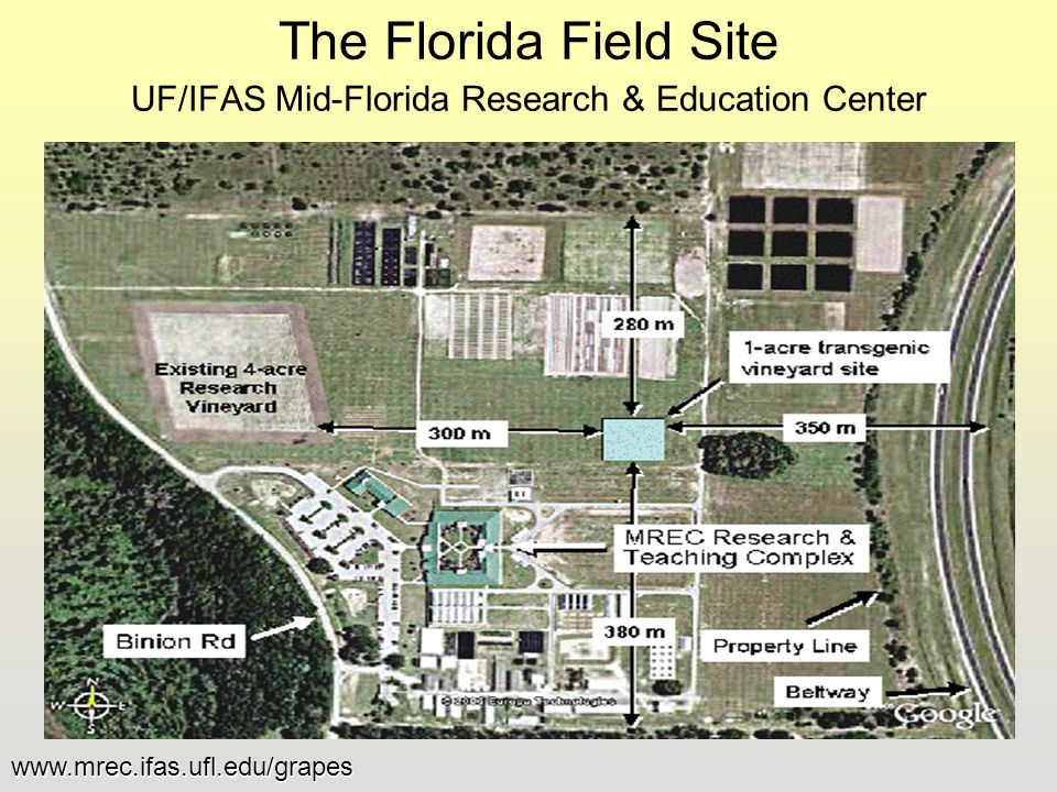 The Florida Field Site UF/IFAS Mid-Florida Research & Education Center