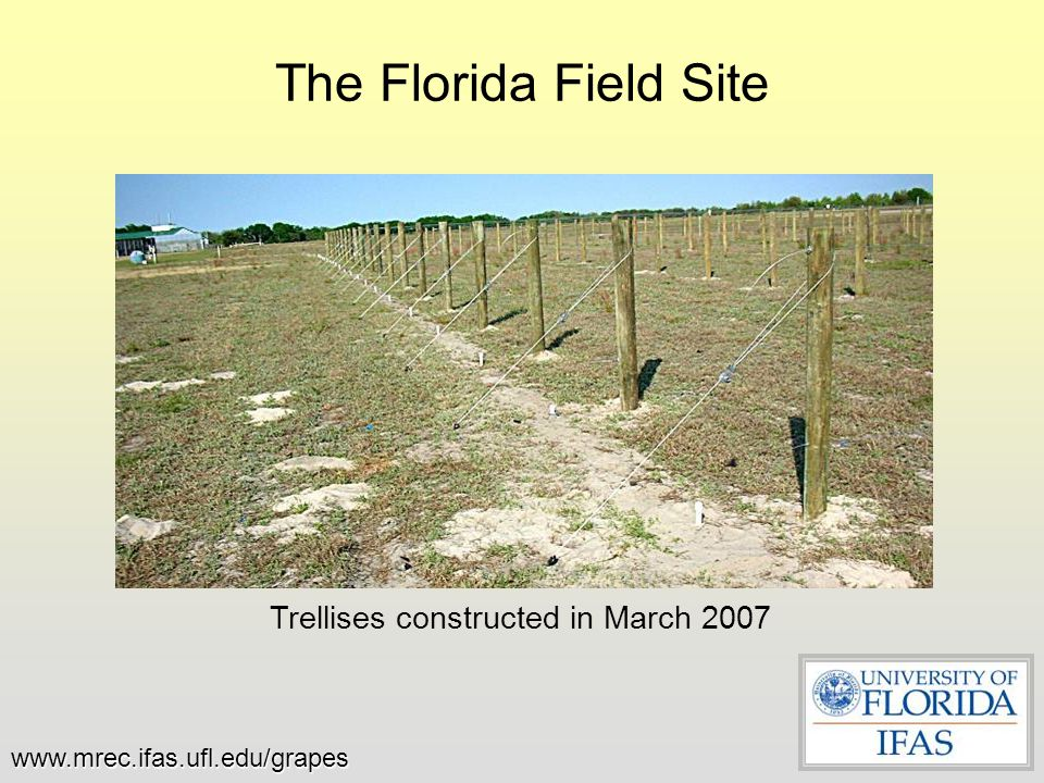 Trellises constructed in March 2007