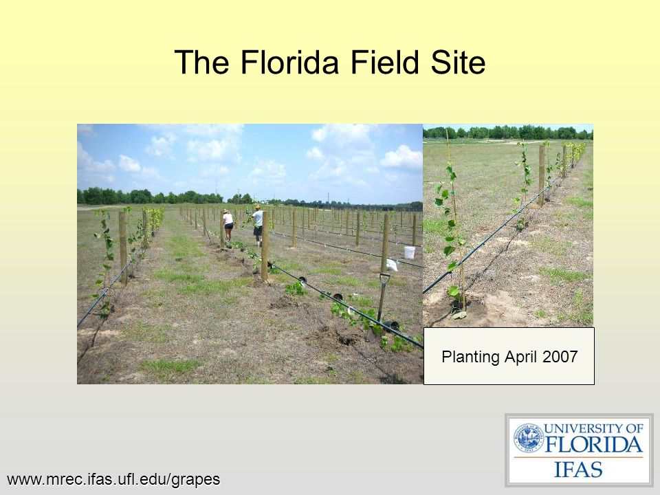 The Florida Field Site Planting April 2007