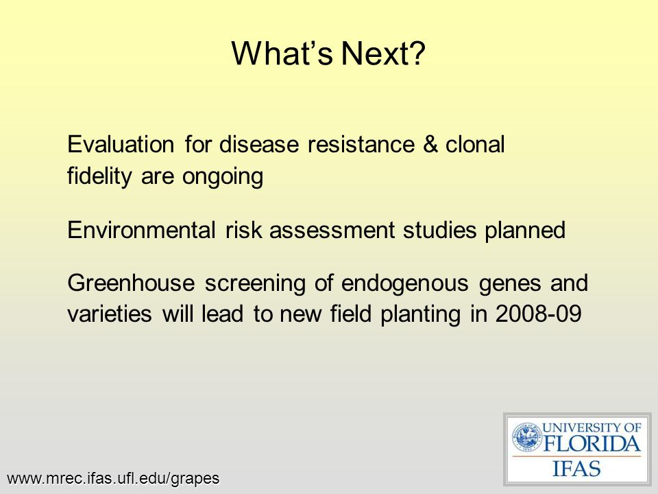 What's Next Evaluation for disease resistance & clonal